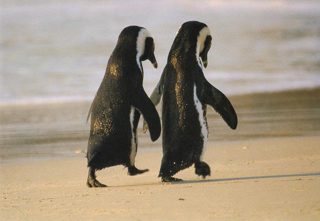 Cartoon penguins holding hands - photo#6