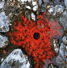 Andy Goldsworthy pic DE workshops 2015