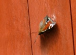 butterfly-picture-life-retreat-20101