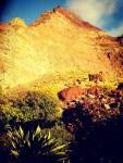 mountain-la-gomera