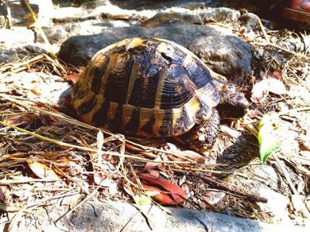 tortoise greece 2017